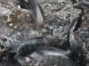 aquaponik2.jpg