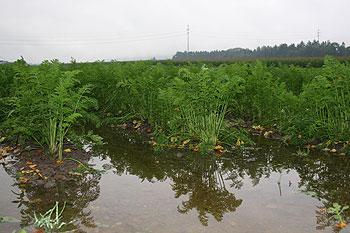 Überschwemmung im Wauwiler Moos
