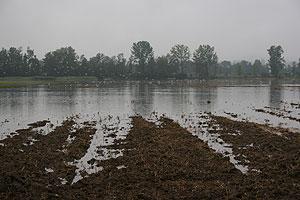 Hochwasser im Wauwiler Moos LU