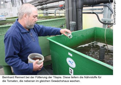 Aquaponik-Projekt in Berlin