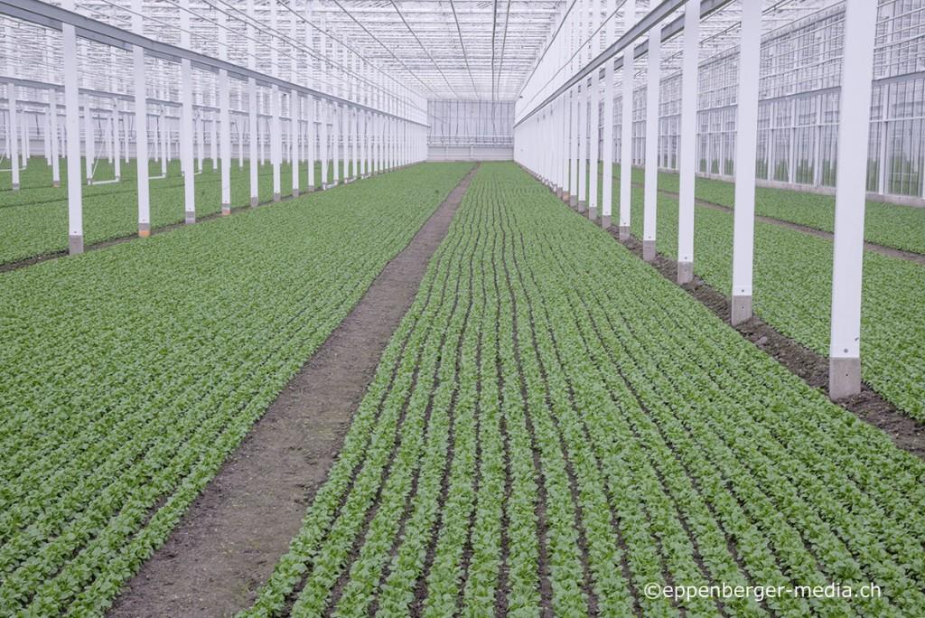 Böden in Gewächshäusern erfüllen die Anforderungen an Fruchtfolgeflächen.